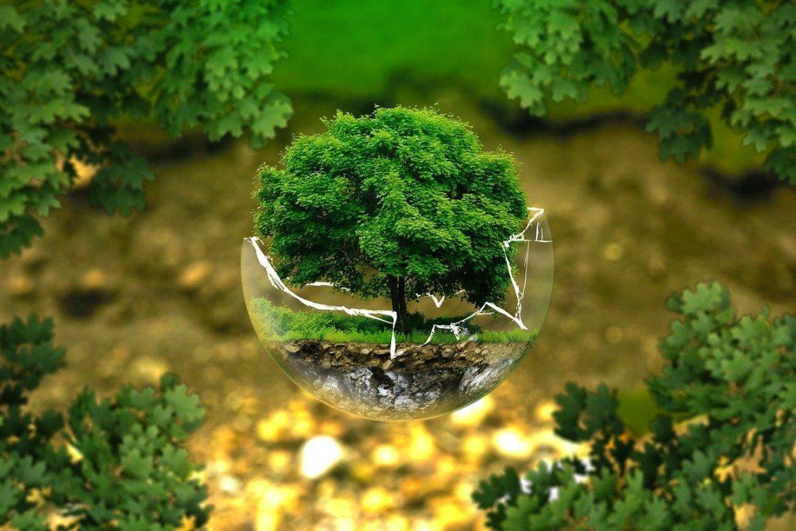 Comment promouvoir l'écologie dans son entourage ?