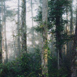 Pas de formation de bois pour les arbres en cas de manque d'eau